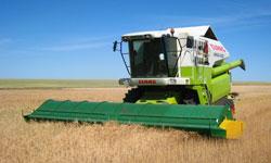 Зерноуборочный комбайн в поле